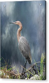 Acrylic Print featuring the photograph Looking For Food by Kim Hojnacki