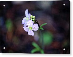 Acrylic Print featuring the photograph Looking For Light by Ben Upham III