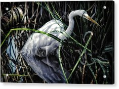 Looking For Lunch Acrylic Print