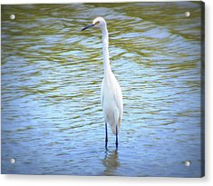 Looking For Lunch  Acrylic Print by Mandy Shupp