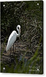 Looking For Lunch Acrylic Print by Tamyra Ayles
