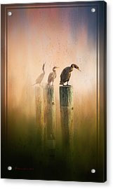 Looking Into The Mist Acrylic Print by Marvin Spates