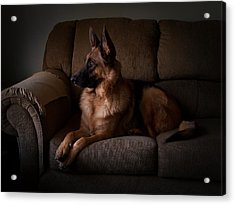 Looking Out The Window - German Shepherd Dog Acrylic Print