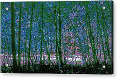 Acrylic Print featuring the photograph Looking Through The Trees by Lyle Crump