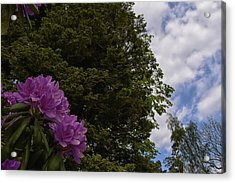 Looking To The Sky Acrylic Print