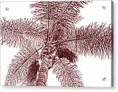 Looking Up At Palm Tree Red Acrylic Print by Ben and Raisa Gertsberg