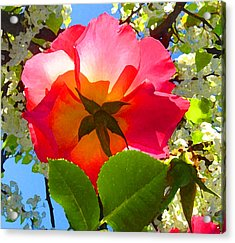 Looking Up At Rose And Tree Acrylic Print