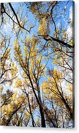 Acrylic Print featuring the photograph Looking Up by Bill Kesler