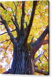 Looking Up From Under The Tree  1 Acrylic Print by Lanjee Chee