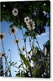 Looking Up Acrylic Print by Ken Day