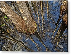 Acrylic Print featuring the photograph Looking Up While Looking Down by Debra and Dave Vanderlaan