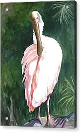 Acrylic Print featuring the painting Look'n Back - Spoonbill by Roxanne Tobaison