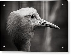 Lookout Acrylic Print by Angela Aird