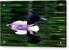Acrylic Print featuring the photograph Loon On The Lake by Rick Frost