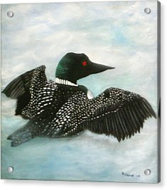 Loon Acrylic Print by Rebecca  Fitchett