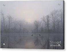 Loons In The Fog Acrylic Print