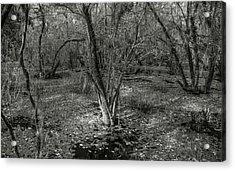 Loop Road Swamp #3 Acrylic Print