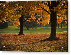 Loose Park Maple Trees Acrylic Print by Chad Davis