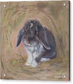 Lop Eared Rabbit- Socks Acrylic Print