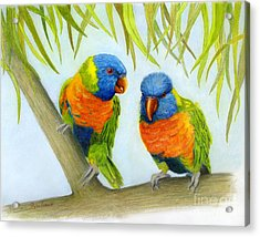 Lorikeet Pair Acrylic Print by Phyllis Howard