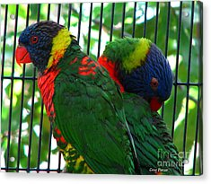 Acrylic Print featuring the photograph Lory by Greg Patzer