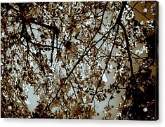 Branch Two Acrylic Print