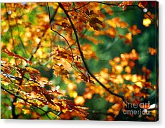 Lost In Leaves Acrylic Print by Kathy McClure