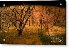 Lost Acrylic Print by Jayme X