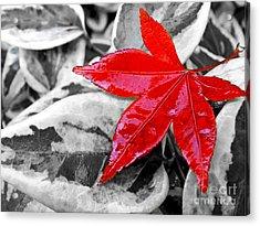 Lost Acrylic Print by Kaye Menner