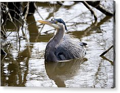 Acrylic Print featuring the photograph Lost Lagoon Great Blue Heron 2 by Terry Elniski