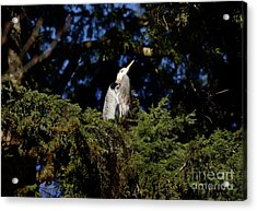 Acrylic Print featuring the photograph Lost Lagoon Great Blue Heron 5 by Terry Elniski