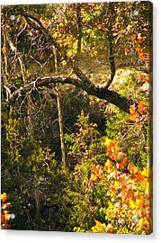 Lost Maples Scenery Acrylic Print