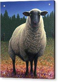 Lost Sheep Acrylic Print by James W Johnson