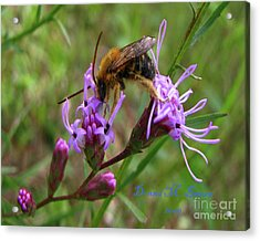 Acrylic Print featuring the photograph Lost Treasures  by Donna Brown