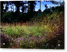Acrylic Print featuring the photograph Lots Of Weeds by Joseph G Holland