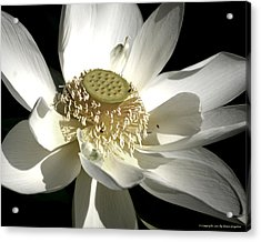 Acrylic Print featuring the photograph Lotus 8514ds by Brian Gryphon