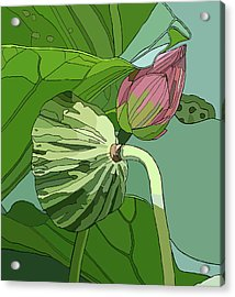 Lotus And Bud Acrylic Print