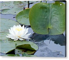 Lily And Leaf Acrylic Print