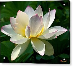Lotus Beauty--disheveled Dl061 Acrylic Print