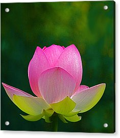 Acrylic Print featuring the photograph Lotus Blossom 842010 by Byron Varvarigos