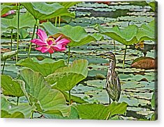 Lotus Blossom And Heron Acrylic Print by HH Photography of Florida