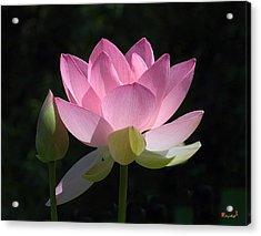 Lotus Bud--snuggle Bud Dl005 Acrylic Print