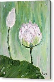 Lotus Emerging Acrylic Print