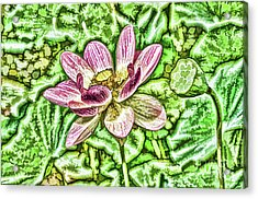 Lotus Flower In The Pond 4 Acrylic Print