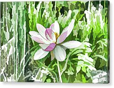Lotus Flower In The Pond 7 Acrylic Print by Lanjee Chee