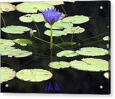 Lotus Flower Reflection Acrylic Print