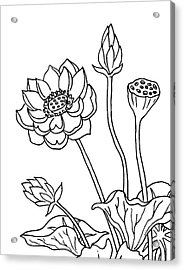 Lotus Flowers Drawing  Acrylic Print
