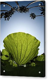 Acrylic Print featuring the photograph Lotus Leaf by Harry Spitz