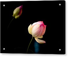 Lotus On Black Acrylic Print