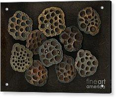 Lotus Pods Acrylic Print by Christian Slanec